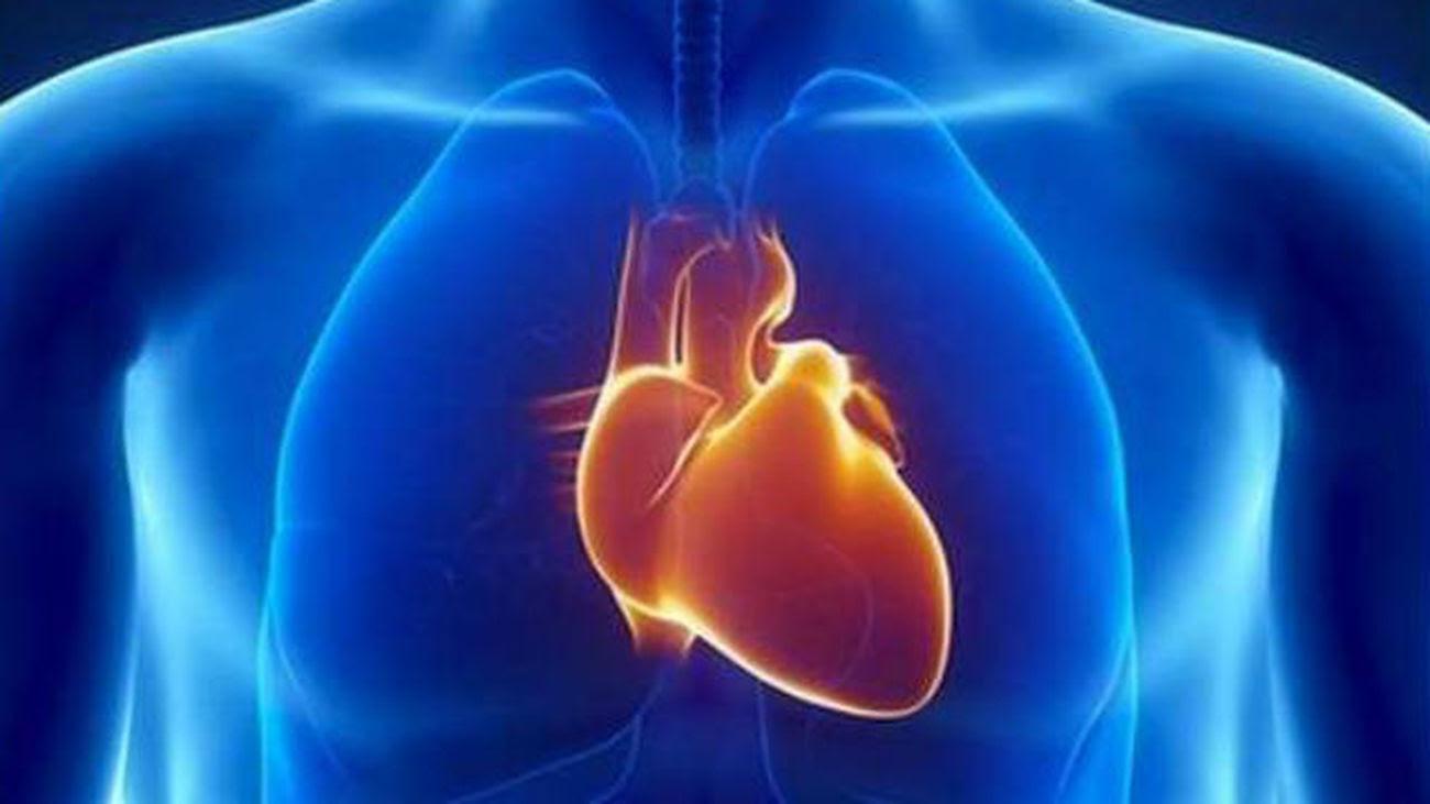 Descubren Por Qué El Corazón Está En El Lado Izquierdo Del Cuerpo Humano