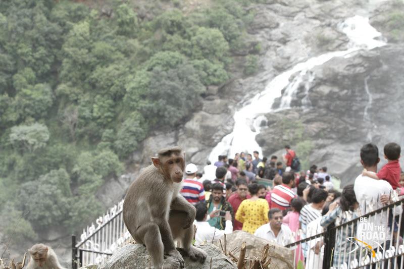 The Monkey model at Gaganachukki waterfalls, Karnataka