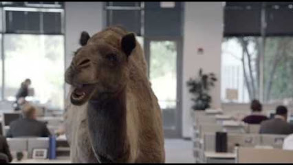 Hump Day Camel Geico Gif Geico Hump Day Remix Quot Guess