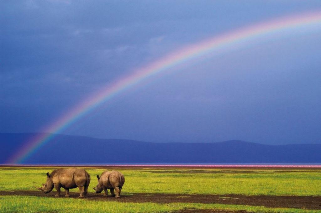 O lado colorido da África selvagem por Alex Bernasconi 01
