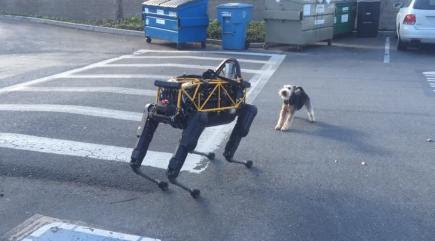 Watch this terrier get irate about a robot dog - BT