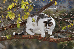 A domestic cat standing on the branch of a tree