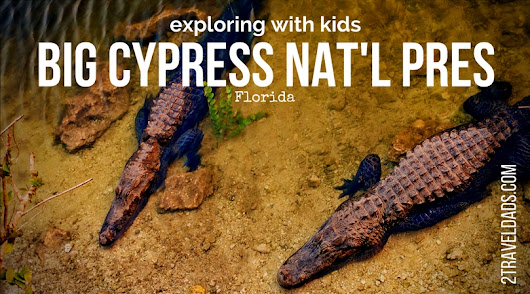 Big Cypress National Preserve: alligators, boardwalks, beautiful swamps