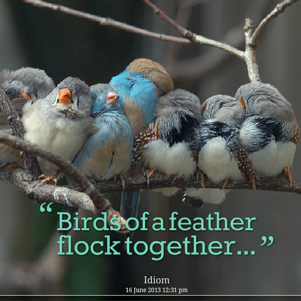 Birds Of A Feather Quotespicturescom
