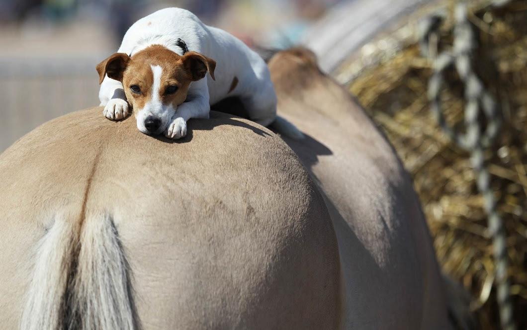 luchshie foto zhivotnyx v avguste 2 Best photos of animals from around the world this week