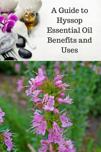 Hyssop Essential Oil Benefits and Uses In Aromatherapy