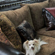 National Pet Day! - Santa Fe Terra Western Furniture