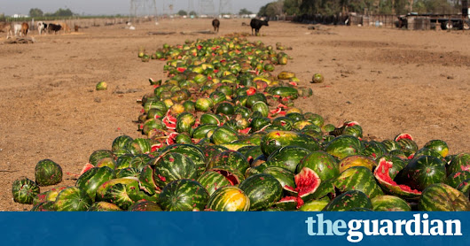 Half of all US food produce is thrown away, new research suggests | Environment | The Guardian