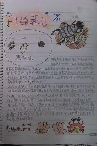 白蟻報告.jpg