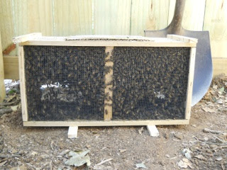 Bees 2012 in Shipped Box