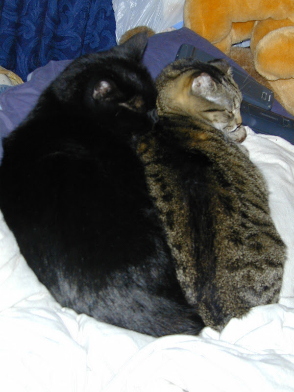 pair of meat loaves