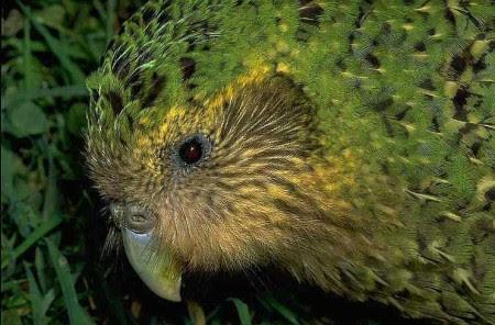 Perierga.gr - Ο παπαγάλος που… χαστουκίζει το φωτογράφο!