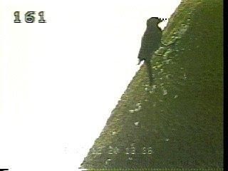 Jun02-1995-shuttle-woodpecker