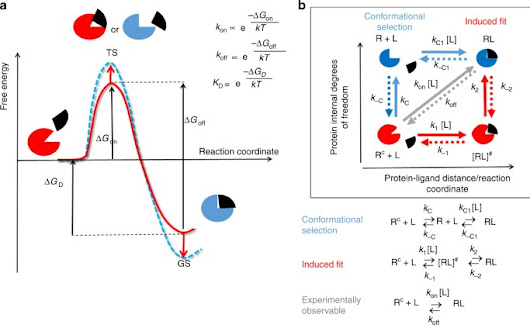Protein conformational flexibility modulates kinetics and thermodynamics of drug binding | Nature Communications
