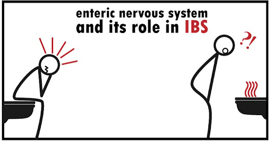 Enteric Nervous System (ENS) | Your Second (Irritable) Brain and IBS - My Labs For Life