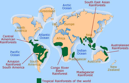 Tropical Rainforests And Deforestation A Lesson With Activities Steemit