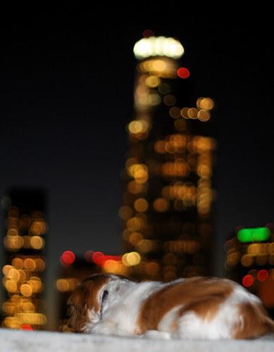 small dog, big city