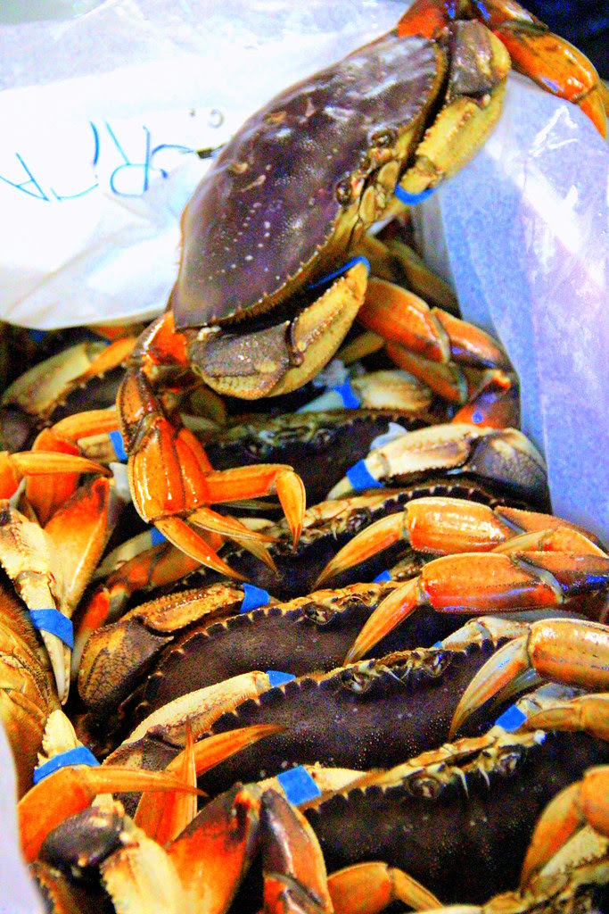 Live Pacific Dungness Crabs