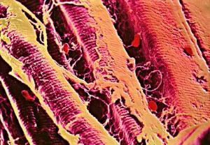 Giappone, creato un filo artificiale per riparare muscoli, vasi e reti neuronali