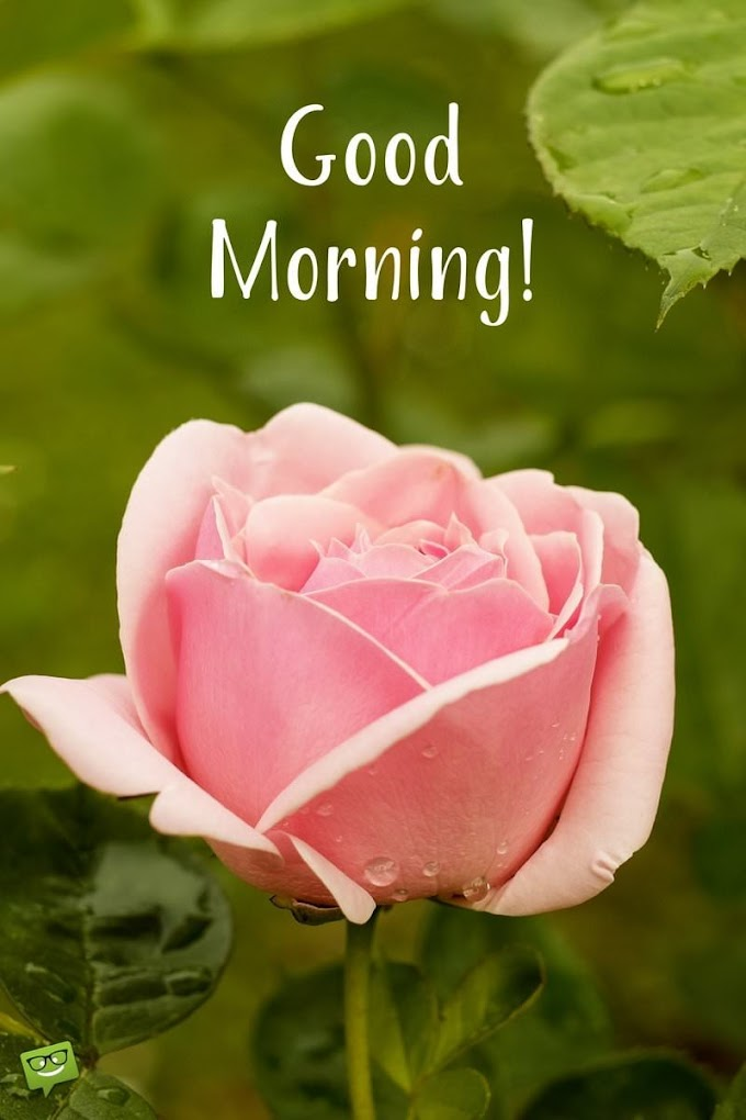 Pleasing Morning Quotes For Her Like Flowers