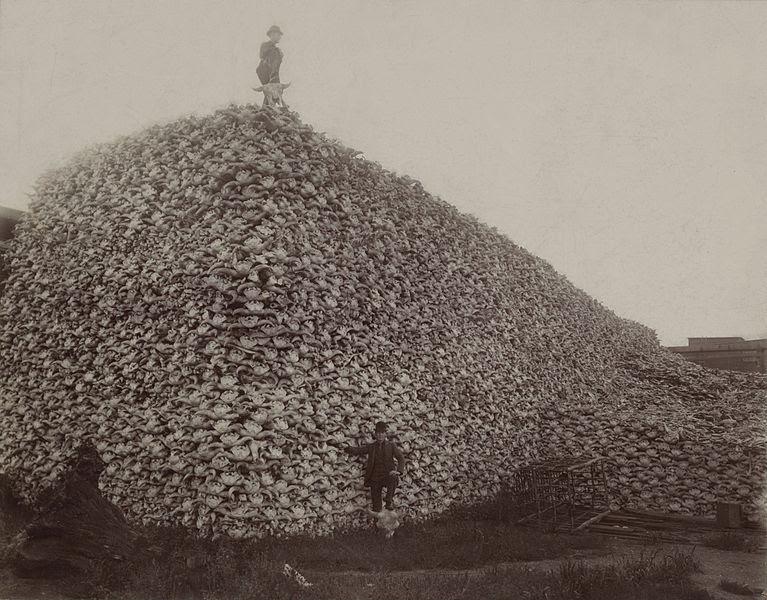 Where The Buffalo No Longer Roamed History Smithsonian