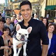 French Bulldog Owned by Mario Lopez: Celebrity Pet of the Week | Pet Information, Training & More | Pet Paw