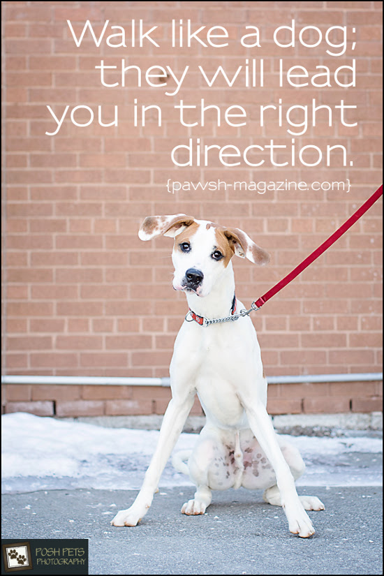AS DOGS WOULD SAY: DOG QUOTE 08 – Pawsh Magazine