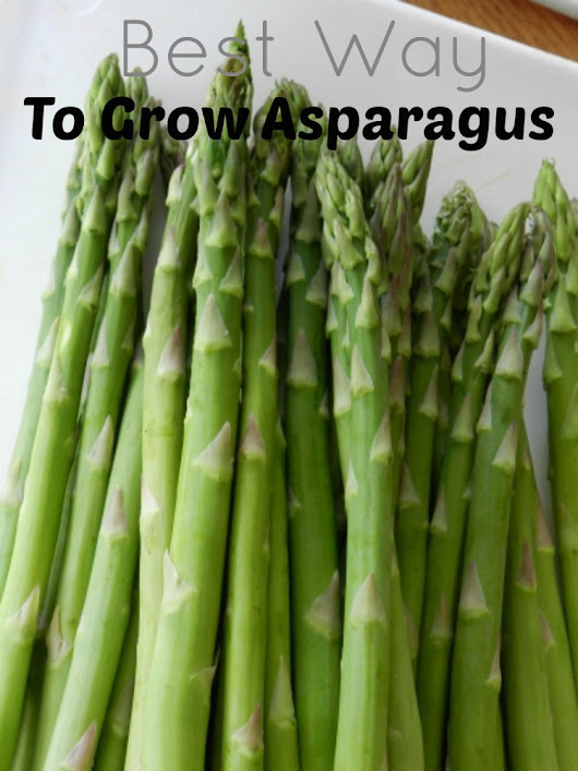 The Best Way To Grow Asparagus - Emily's Frugal Tips
