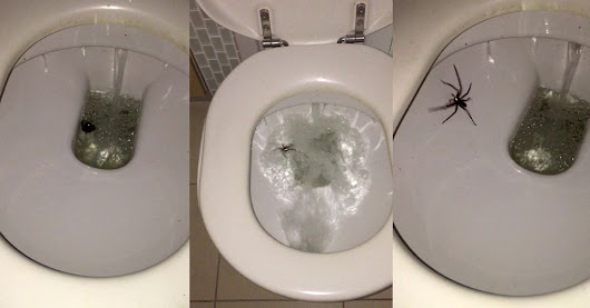 Australia has un-killable spiders and it's terrifying
