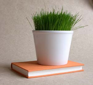 Container Grass