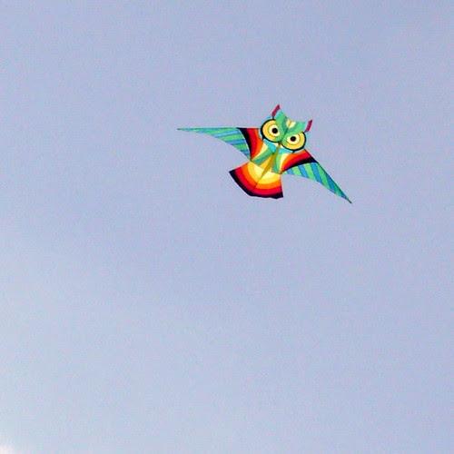 Bright Owl Kite