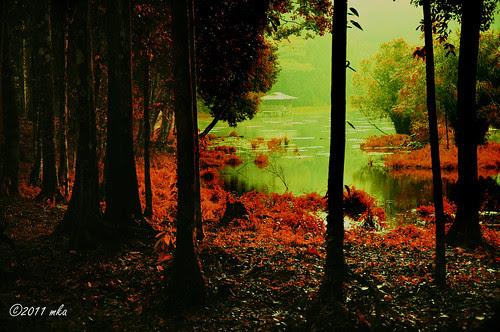 Autumn in Taliwas by mkajunai