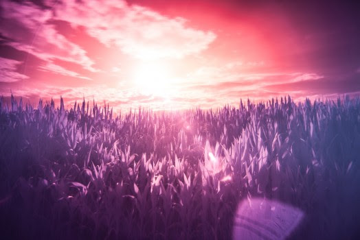 Dream, Filter, Infrared, Meadow