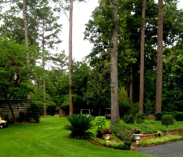 Landscaping Ideas East : Landscaping ideas in east texas benny sam