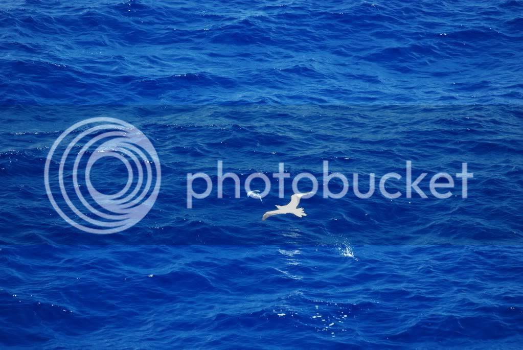 Image result for MARI SI OCEANE