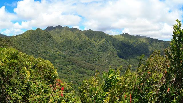 Manoa Cliffs Trail 01