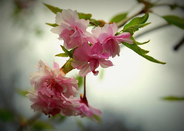 bloom lomo