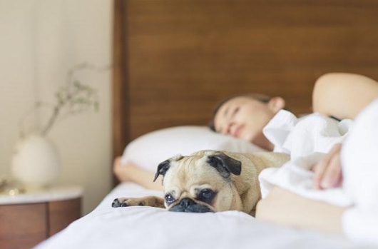 The Pros And Cons Of Having A Pet Friendly Apartment Or Rental Property - Rental Housing Journal