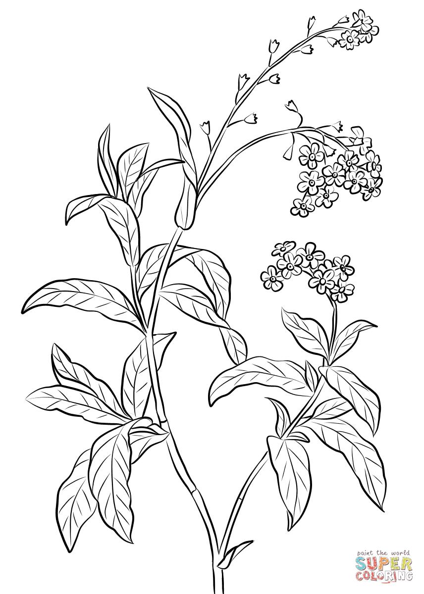bovenste deel kleurplaten bloemen en planten krijg