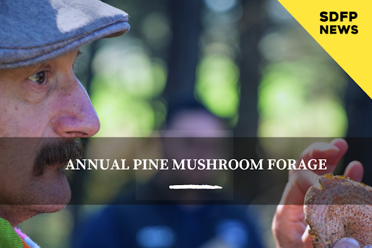 MEET THE EDUCATOR | Diego Bonetto & The SDFP Annual Pine Mushroom Trip