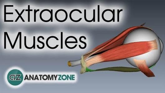 Anatomyzone google photo ccuart Choice Image