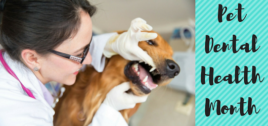 February is Pet Dental Health Month - Good News For Pets