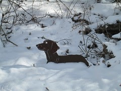 Dachshunds in the Snow by Teckelcar