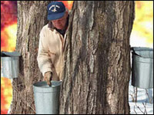 Maple-syrup maker Ryan Tilley -- photo