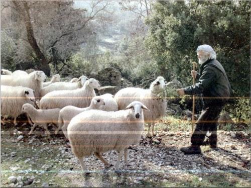 Ο Λάκης Κολυβάς (Μπερδεμπές) όταν σε μεγάλη ηλικία εγκατέλειψε τους Σκάρους και έκανε τον τσοπάνο χαμηλώτερα, στο χωριό Κολυβάτα (Πηγή: Εφημερίδα «Καθημερινή», αν δεν απατώμαι, από ένα αφιέρωμα για την Λευκάδα)