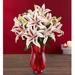 Flower Delivery by 1-800 Flowers Candy Cane Lilies by 1-1800 Flowers