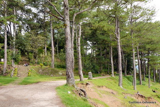 sagada-pine-trees.jpg