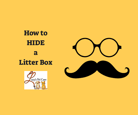 How to Hide a Litter Box - Tips from Lucy's Pet Care -