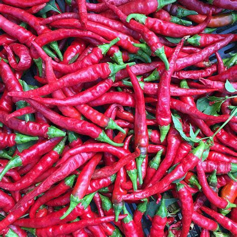 Long Red Cayenne Pepper Seeds (Capsicum annuum)