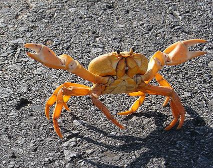 Les Crabes Dansent Au Croisic Je Ne Guérirai Pas Mais Je